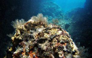 Underwater flora Pag Island